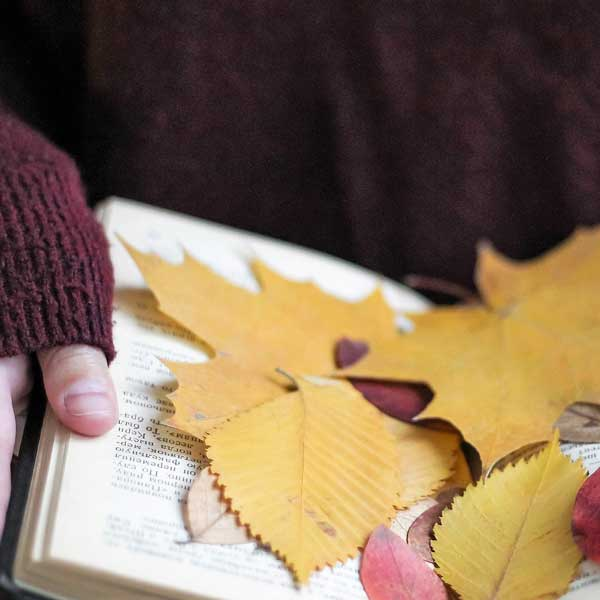 Autumn Holidays at A H Stockwell Book Publishers